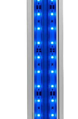 LED actinic blue 1 253x383